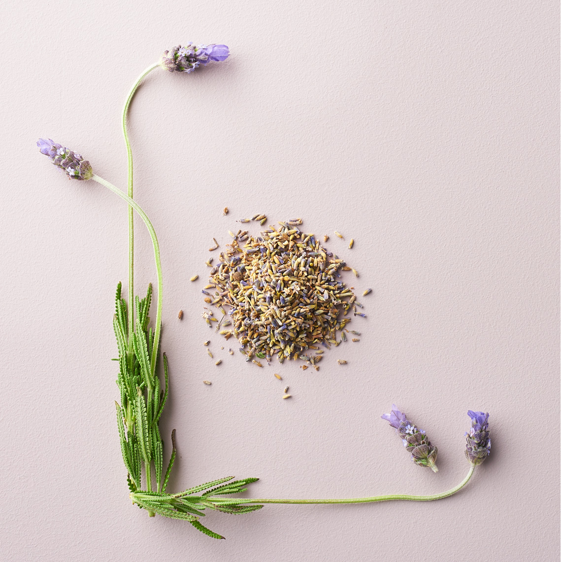 overhead image of lavender plant and seeds on light pink background